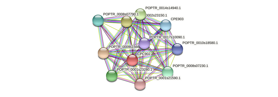 POPTR_0005s24640.1 protein (Populus trichocarpa) - STRING interaction network