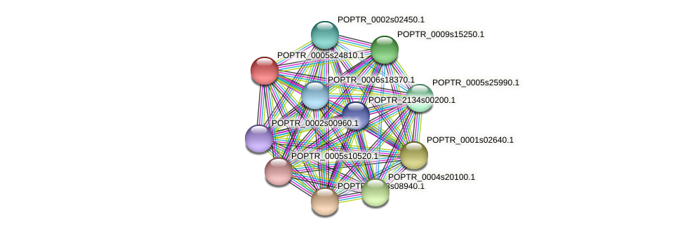 POPTR_0005s24810.1 protein (Populus trichocarpa) - STRING interaction network