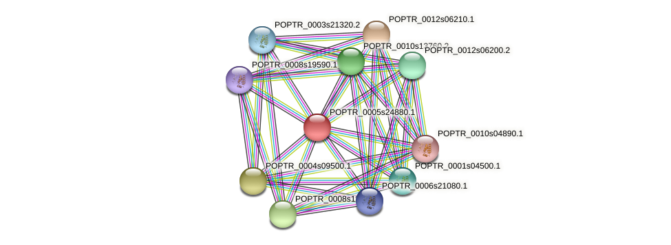POPTR_0005s24880.1 protein (Populus trichocarpa) - STRING interaction network