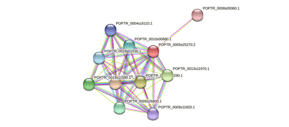 POPTR_0005s25270.1 protein (Populus trichocarpa) - STRING interaction network