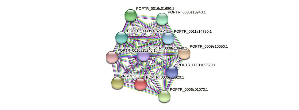 POPTR_0005s25520.1 protein (Populus trichocarpa) - STRING interaction network