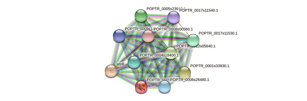 POPTR_0005s25660.1 protein (Populus trichocarpa) - STRING interaction network