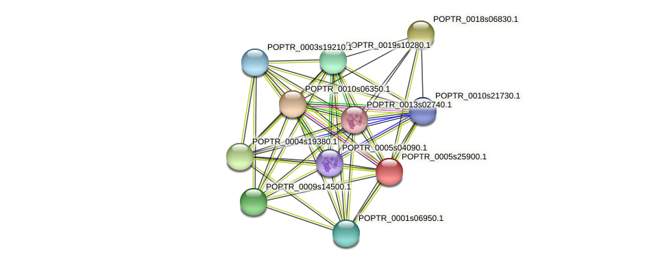 POPTR_0005s25900.1 protein (Populus trichocarpa) - STRING interaction network