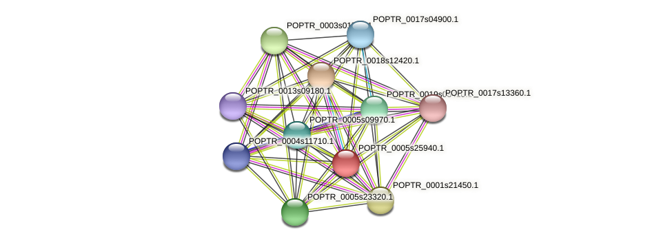 POPTR_0005s25940.1 protein (Populus trichocarpa) - STRING interaction network