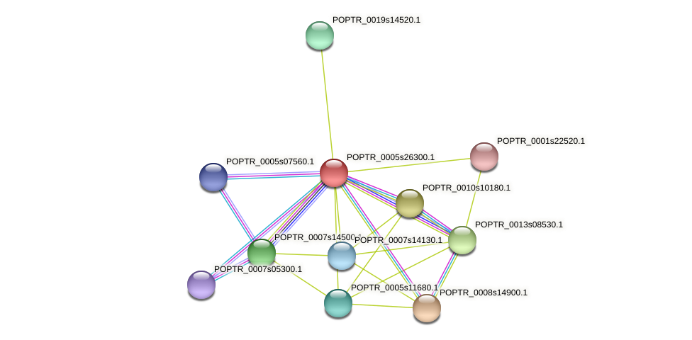 POPTR_0005s26300.1 protein (Populus trichocarpa) - STRING interaction network