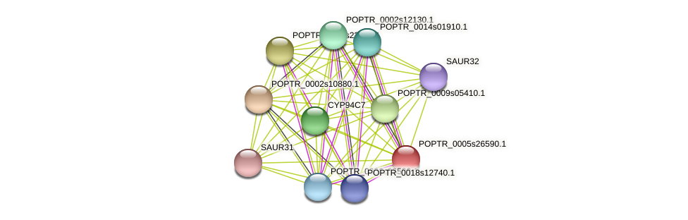 POPTR_0005s26590.1 protein (Populus trichocarpa) - STRING interaction network