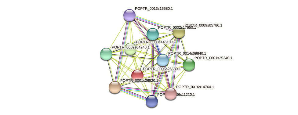 POPTR_0005s26680.1 protein (Populus trichocarpa) - STRING interaction network