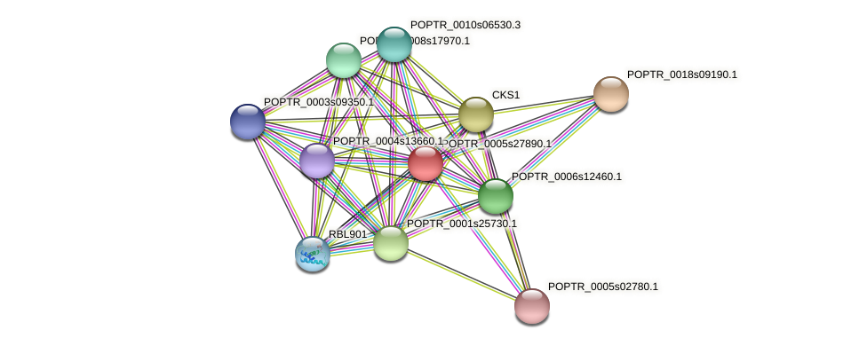 POPTR_0005s27890.1 protein (Populus trichocarpa) - STRING interaction network