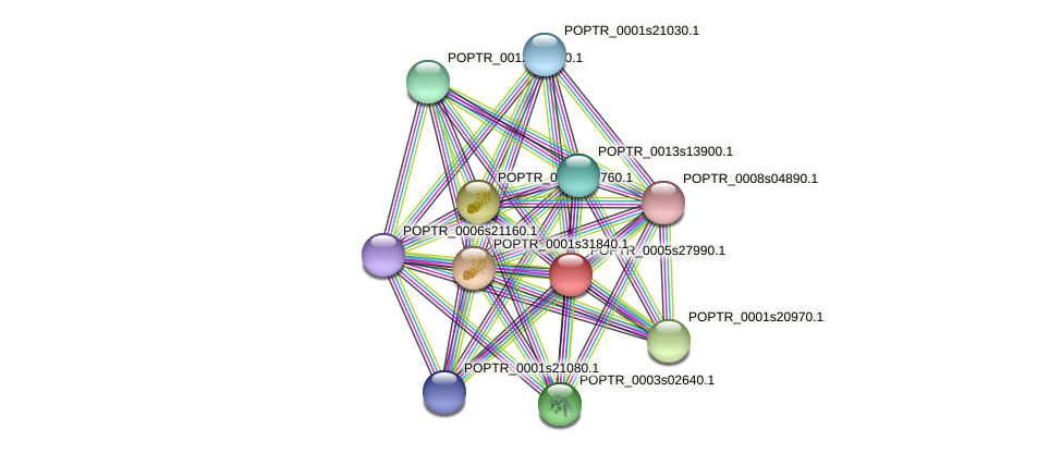 POPTR_0005s27990.1 protein (Populus trichocarpa) - STRING interaction network