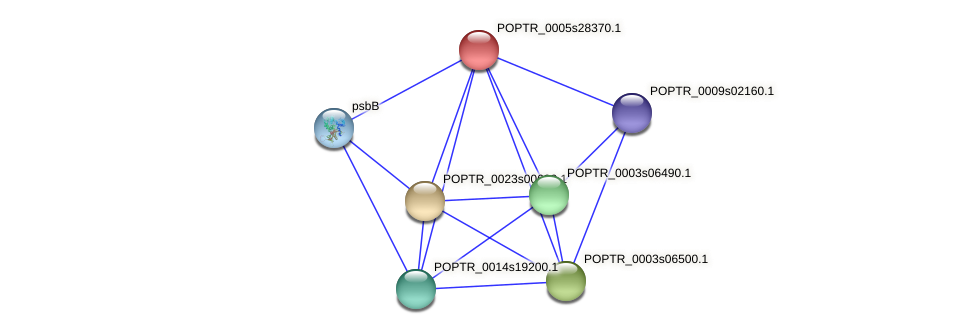 POPTR_0005s28370.1 protein (Populus trichocarpa) - STRING interaction network