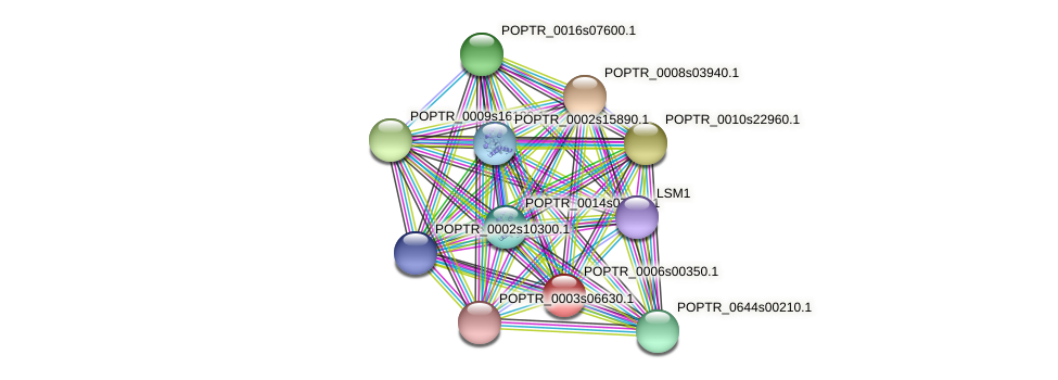 POPTR_0006s00350.1 protein (Populus trichocarpa) - STRING interaction network