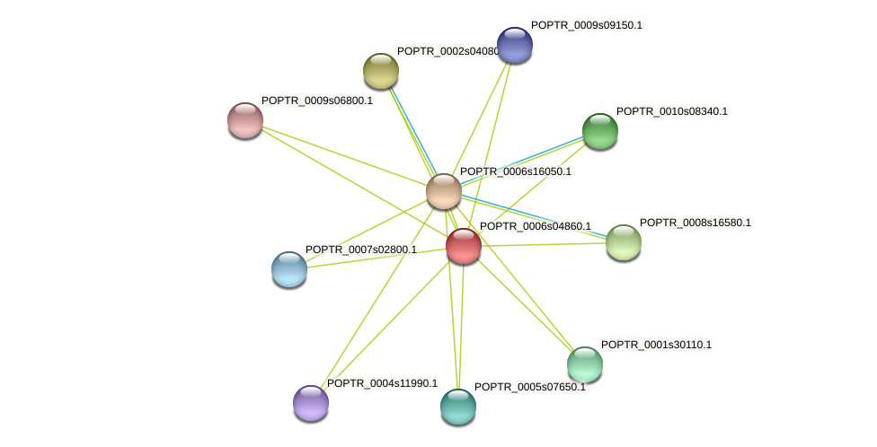 POPTR_0006s04860.1 protein (Populus trichocarpa) - STRING interaction network