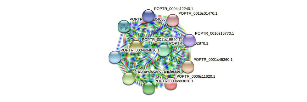 POPTR_0006s11620.1 protein (Populus trichocarpa) - STRING interaction network