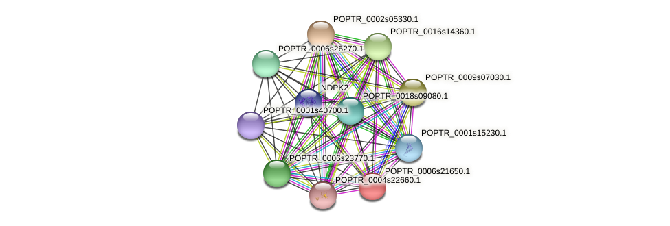 POPTR_0006s21650.1 protein (Populus trichocarpa) - STRING interaction network