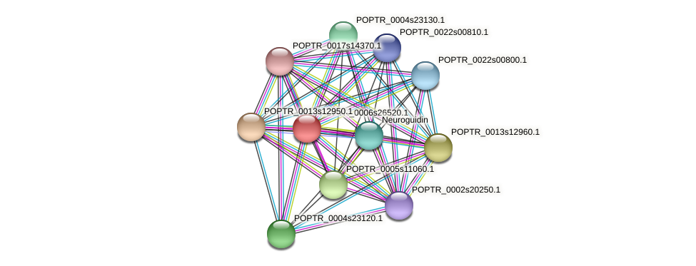 POPTR_0006s26520.1 protein (Populus trichocarpa) - STRING interaction network