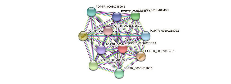 POPTR_0006s28150.1 protein (Populus trichocarpa) - STRING interaction network
