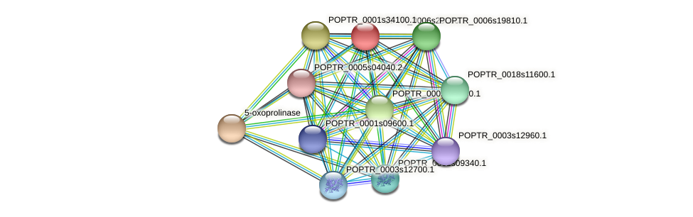 POPTR_0006s29330.1 protein (Populus trichocarpa) - STRING interaction network