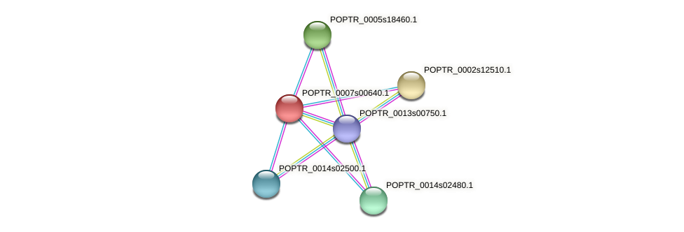 POPTR_0007s00640.1 protein (Populus trichocarpa) - STRING interaction network
