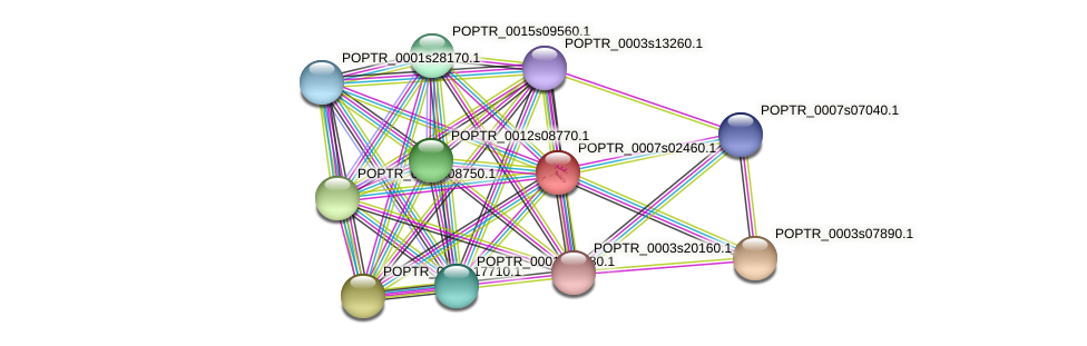 POPTR_0007s02460.1 protein (Populus trichocarpa) - STRING interaction network