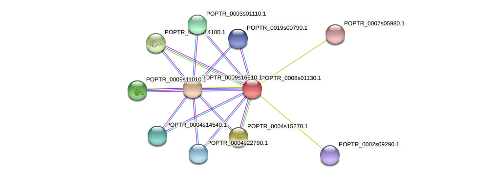 POPTR_0008s01130.1 protein (Populus trichocarpa) - STRING interaction network