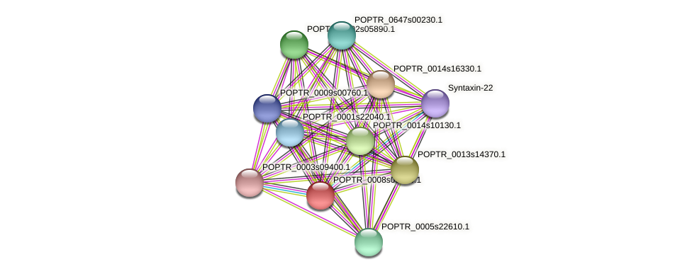 POPTR_0008s03550.1 protein (Populus trichocarpa) - STRING interaction network