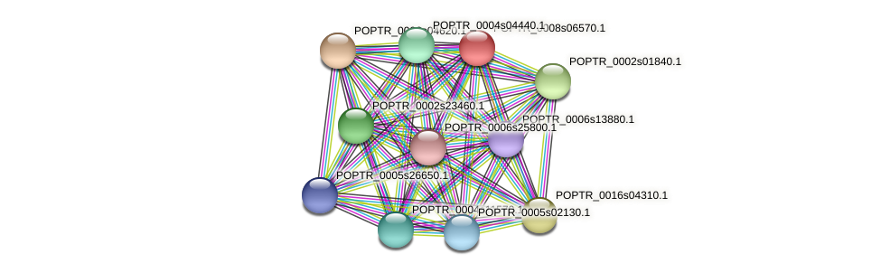 POPTR_0008s06570.1 protein (Populus trichocarpa) - STRING interaction network
