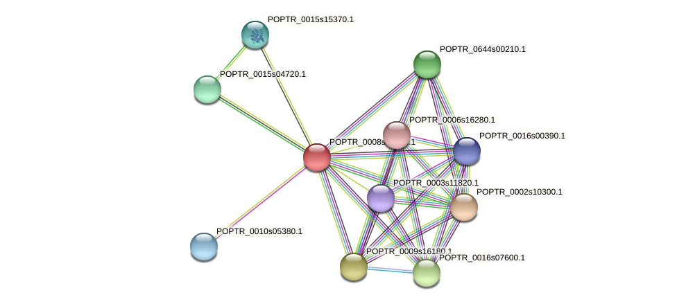 POPTR_0008s13360.1 protein (Populus trichocarpa) - STRING interaction network