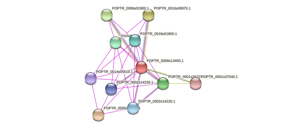 POPTR_0008s13450.1 protein (Populus trichocarpa) - STRING interaction network