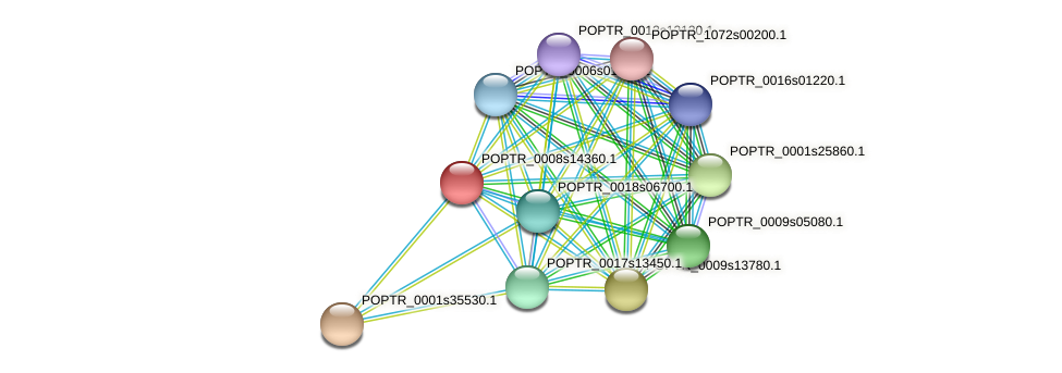 POPTR_0008s14360.1 protein (Populus trichocarpa) - STRING interaction network