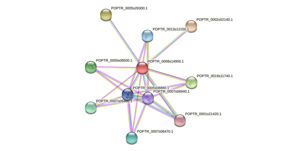 POPTR_0008s14900.1 protein (Populus trichocarpa) - STRING interaction network