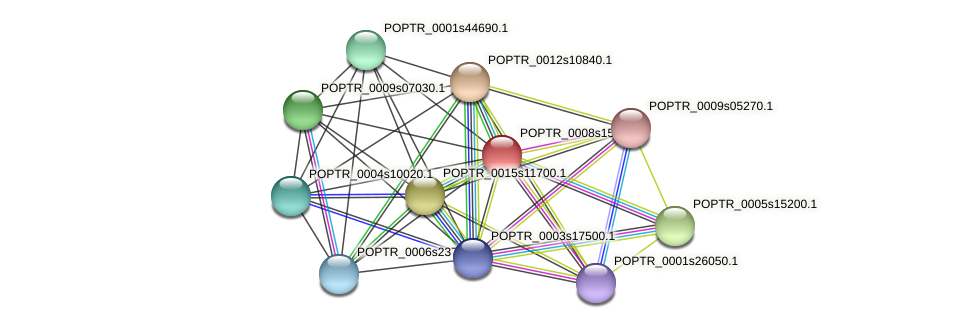 POPTR_0008s15310.1 protein (Populus trichocarpa) - STRING interaction network