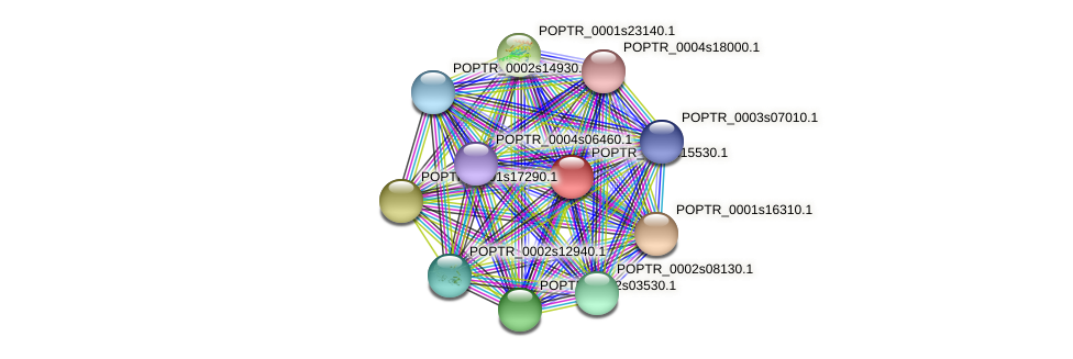 POPTR_0008s15530.1 protein (Populus trichocarpa) - STRING interaction network