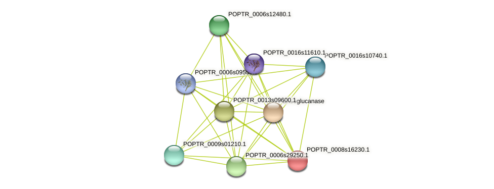 POPTR_0008s16230.1 protein (Populus trichocarpa) - STRING interaction network