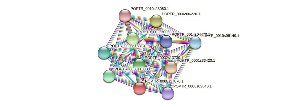 POPTR_0008s17070.1 protein (Populus trichocarpa) - STRING interaction network