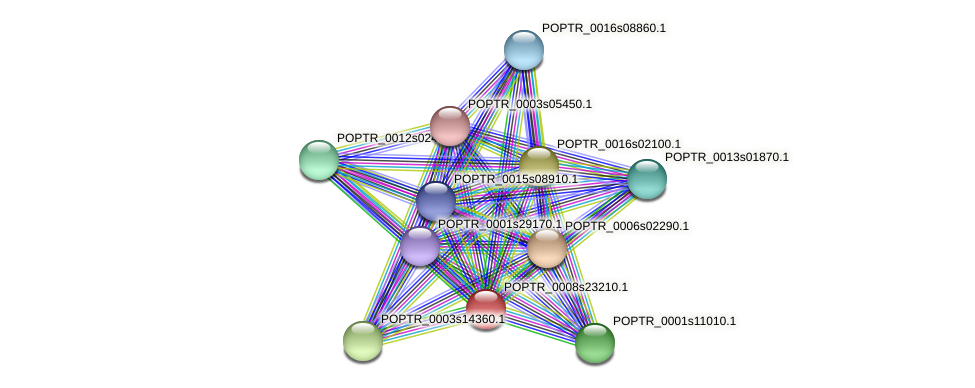 POPTR_0008s23210.1 protein (Populus trichocarpa) - STRING interaction network