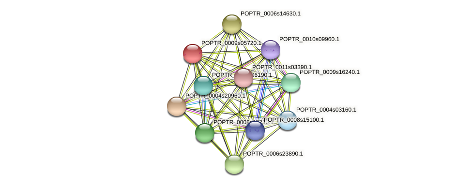 POPTR_0009s05720.1 protein (Populus trichocarpa) - STRING interaction network