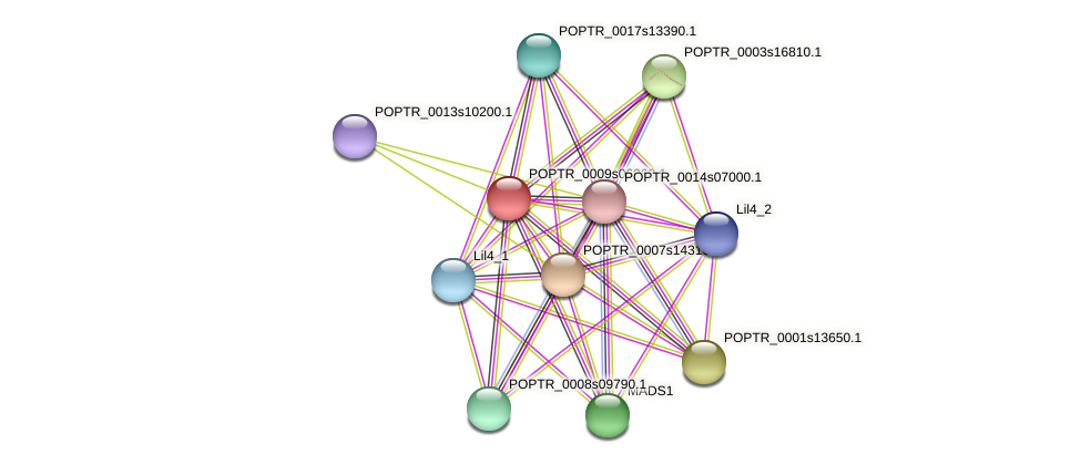POPTR_0009s06060.1 protein (Populus trichocarpa) - STRING interaction network