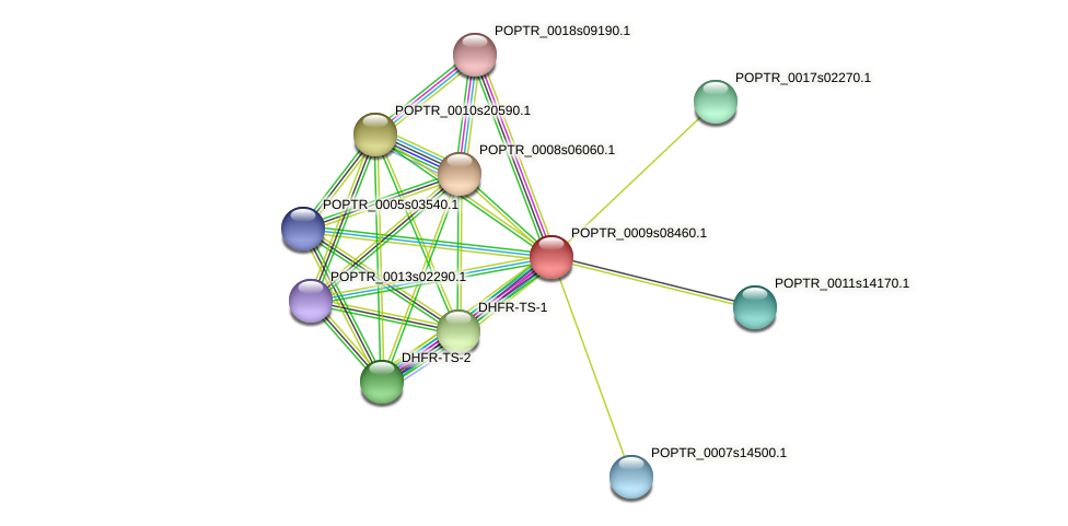 POPTR_0009s08460.1 protein (Populus trichocarpa) - STRING interaction network