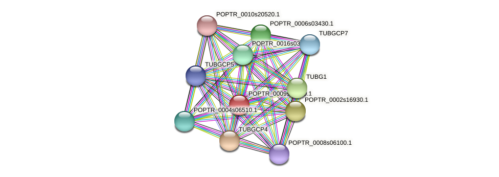 POPTR_0009s15540.1 protein (Populus trichocarpa) - STRING interaction network