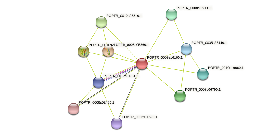 POPTR_0009s16160.1 protein (Populus trichocarpa) - STRING interaction network