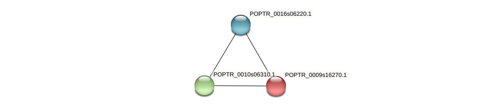 POPTR_0009s16270.1 protein (Populus trichocarpa) - STRING interaction network