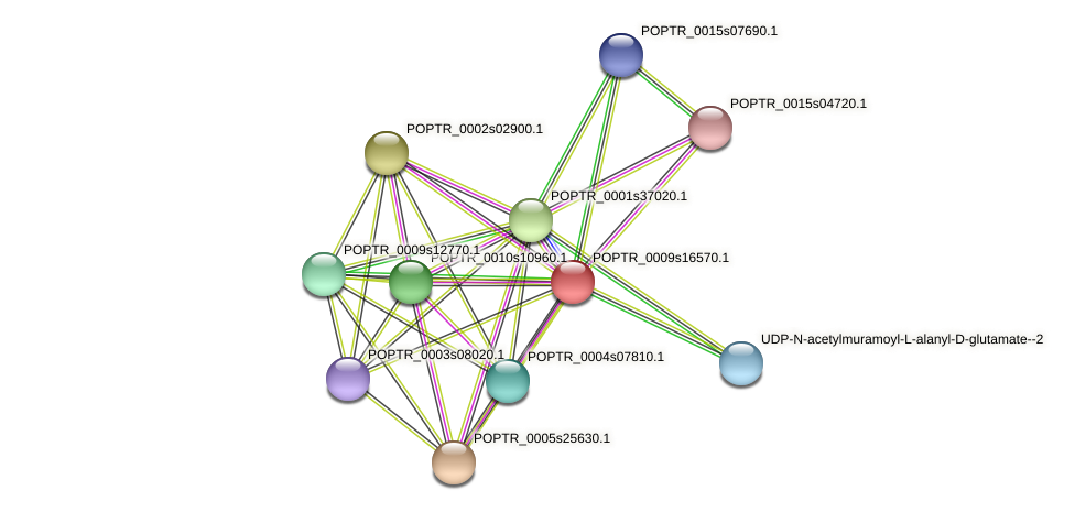 POPTR_0009s16570.1 protein (Populus trichocarpa) - STRING interaction network