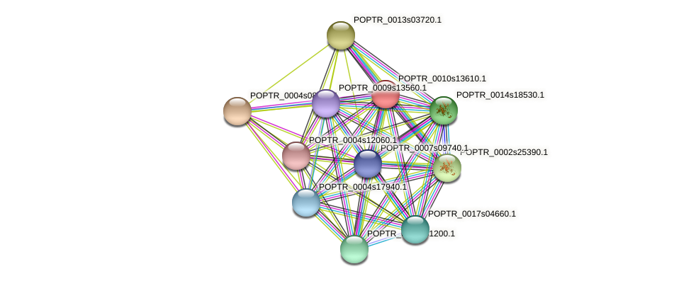 POPTR_0010s13610.1 protein (Populus trichocarpa) - STRING interaction network