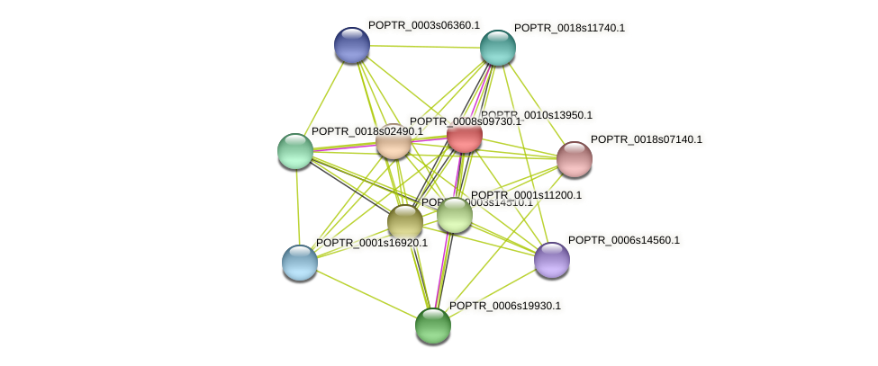 POPTR_0010s13950.1 protein (Populus trichocarpa) - STRING interaction network