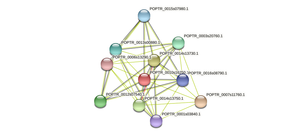 POPTR_0010s16250.1 protein (Populus trichocarpa) - STRING interaction network