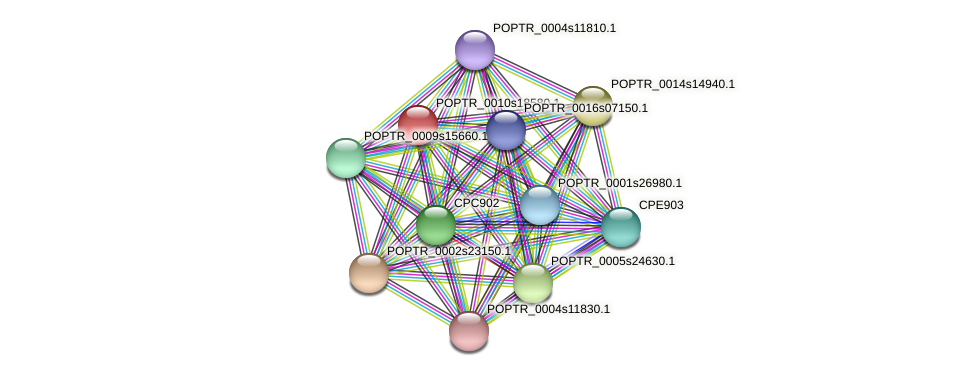 POPTR_0010s18580.1 protein (Populus trichocarpa) - STRING interaction network