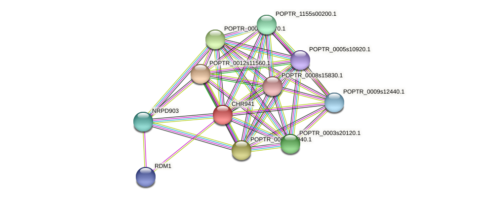 POPTR_0010s19110.1 protein (Populus trichocarpa) - STRING interaction network