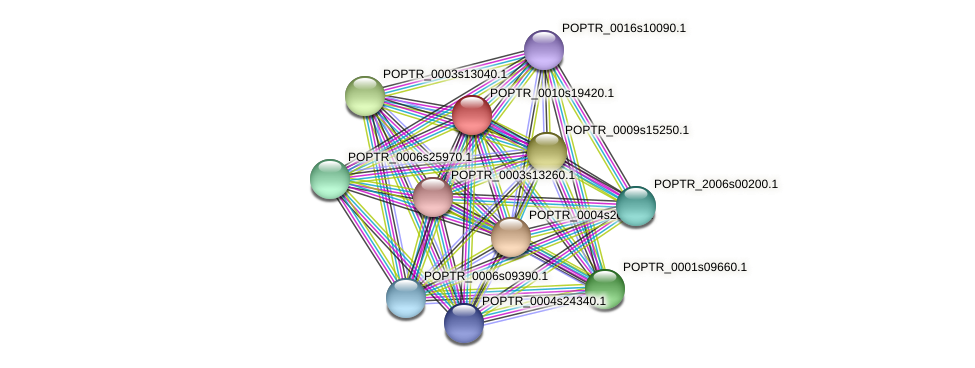 POPTR_0010s19420.1 protein (Populus trichocarpa) - STRING interaction network