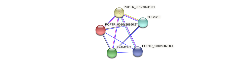 POPTR_0010s20860.1 protein (Populus trichocarpa) - STRING interaction network