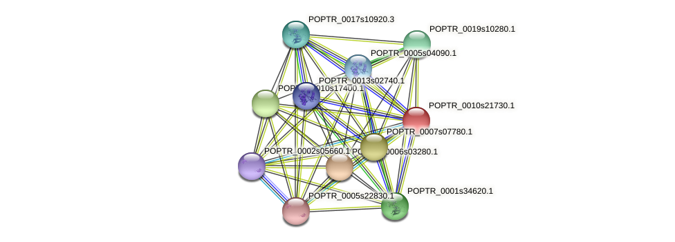 POPTR_0010s21730.1 protein (Populus trichocarpa) - STRING interaction network